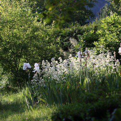 Zahrada Snezenka