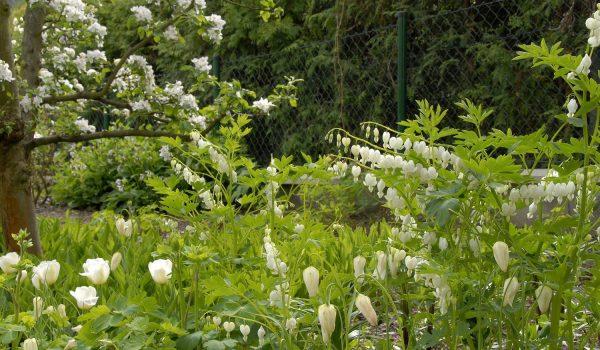 Zahrada Snezenka bila