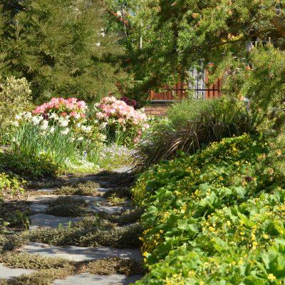 Přední část s Rhododendrony